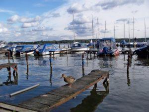 Ein Bild, das Sportbootsteganlagen an einem Binnengewässer an einem leicht bewölkten Tag zeigt,, vereinzelt befinden sich Kleinboote an den Liegeplätzen.